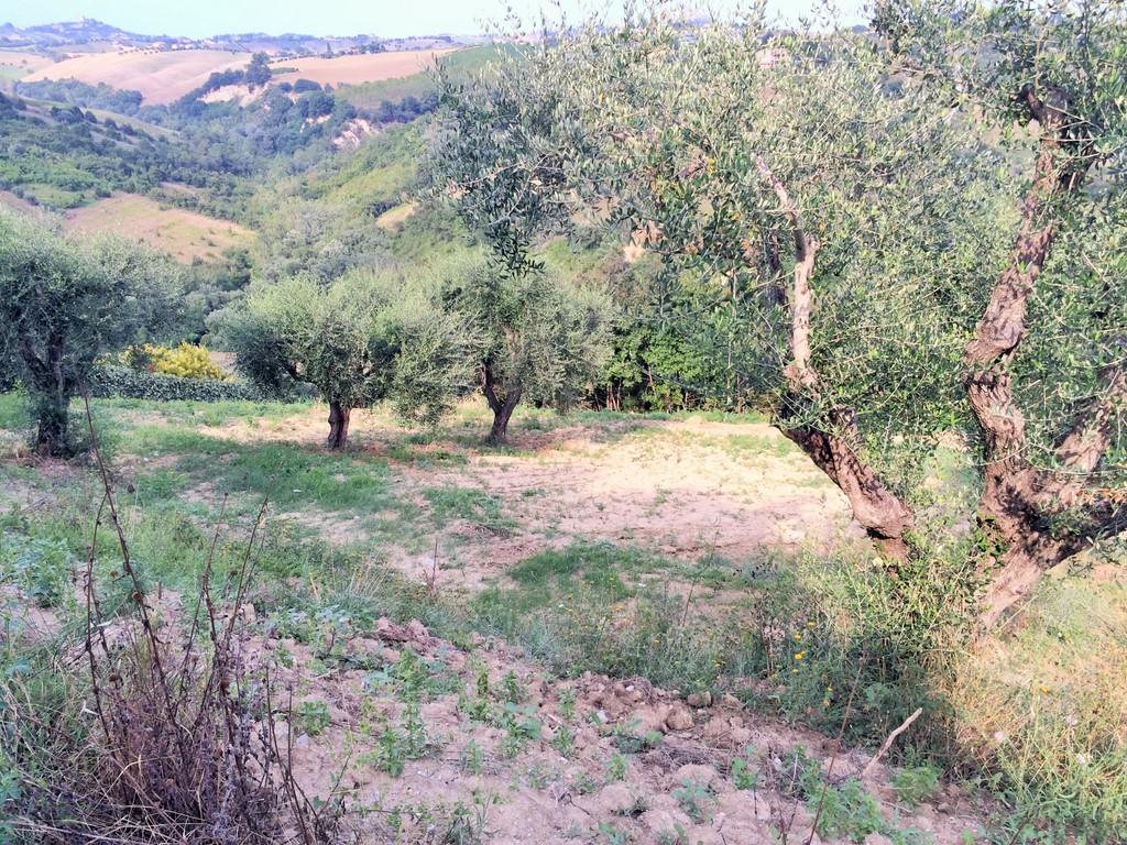 Terreno Agricolo in Vendita a Monsampolo del Tronto #1