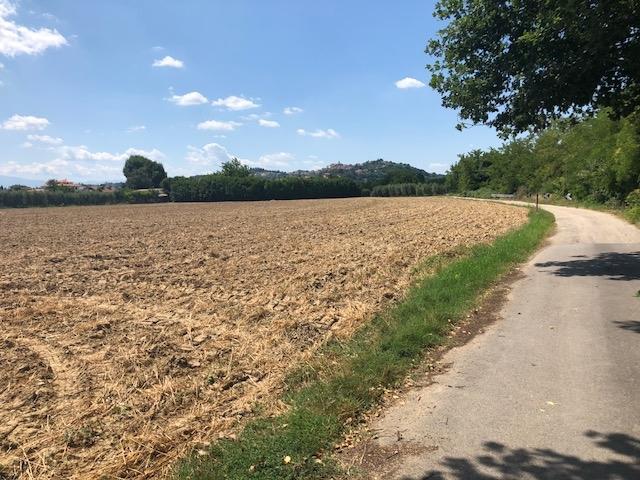 Terreno Agricolo in Vendita a Spinetoli #1