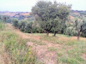 Terreno Agricolo in Vendita a Monsampolo del Tronto #2