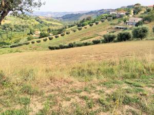 Terreno Agricolo in Vendita a Monsampolo del Tronto #4
