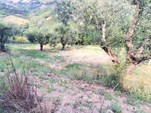 Terreno Agricolo in Vendita a Monsampolo del Tronto #5