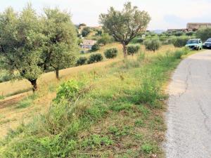 Terreno Agricolo in Vendita a Monsampolo del Tronto #3