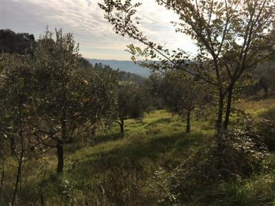 Terreno edificabile in Vendita a Monsampolo del Tronto #8
