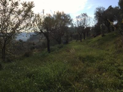 Terreno edificabile in Vendita a Monsampolo del Tronto #5