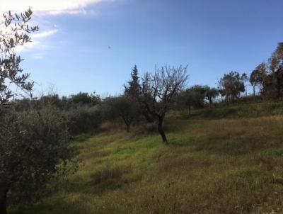 Terreno edificabile in Vendita a Monsampolo del Tronto #9
