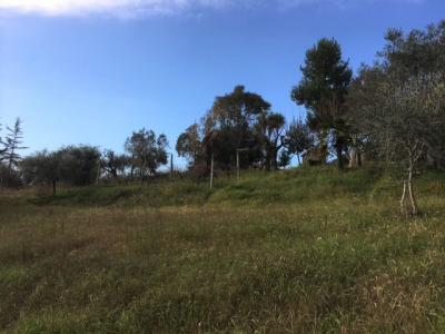 Terreno edificabile in Vendita a Monsampolo del Tronto #3