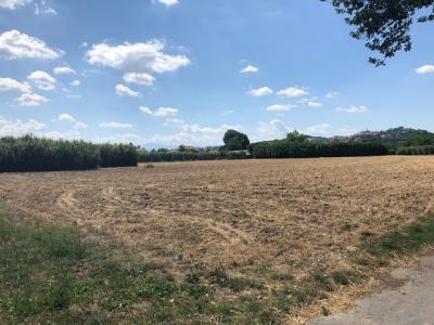 Terreno Agricolo in Vendita a Spinetoli #2