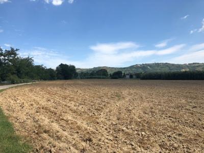 Terreno Agricolo in Vendita a Spinetoli #5