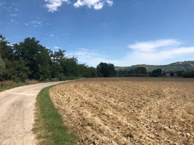 Terreno Agricolo in Vendita a Spinetoli #3