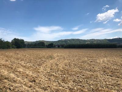 Terreno Agricolo in Vendita a Spinetoli #6